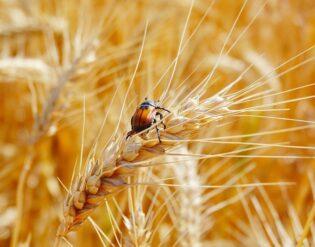 інсектициди