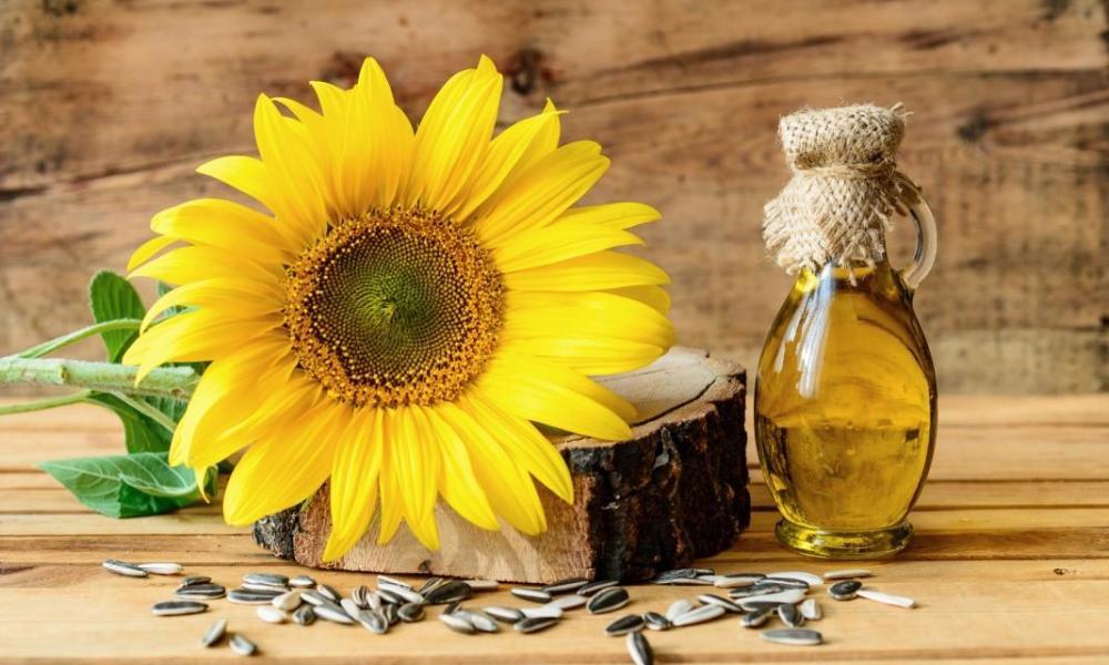 цена на подсолнечное масло в Украине